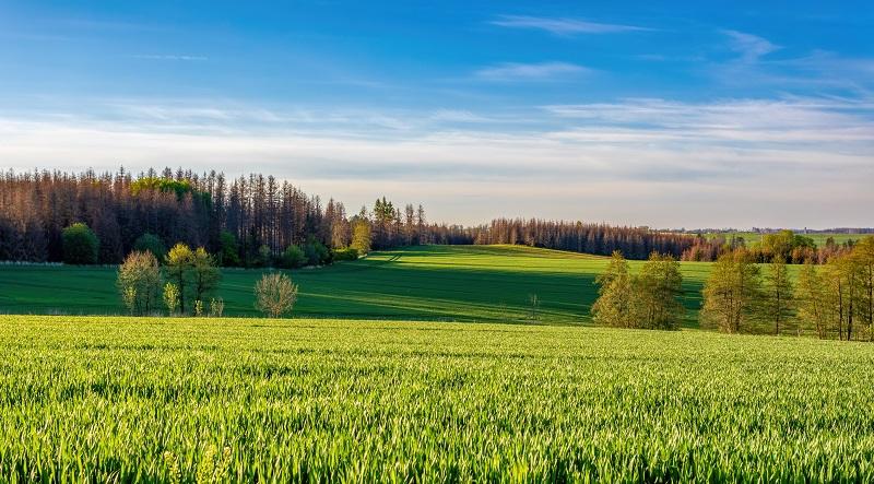 Zakup ziemi pod siedlisko a ulga mieszkaniowa