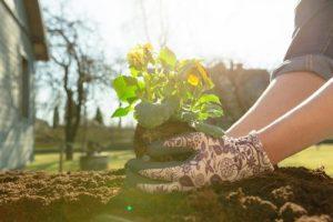 Przydomowy ogród – wersja dla leniwych