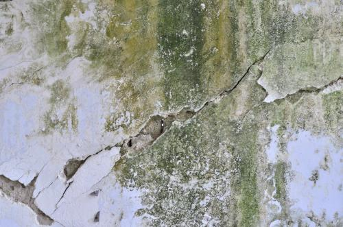 Jak usunąć zielony nalot z elewacji domu?